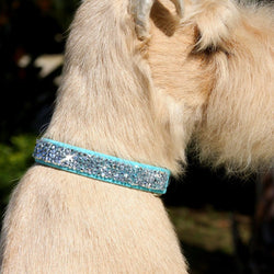 Crystal Rocks Swarovski Crystal Dog Collar by Susan Lanci Puppy's Home