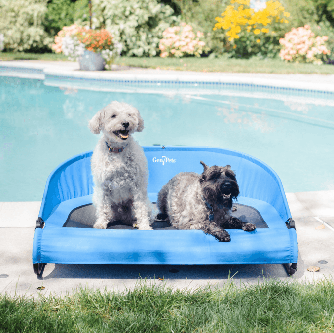 Cool-Air Cot for Dogs- Trailblazer Blue Puppy's Home