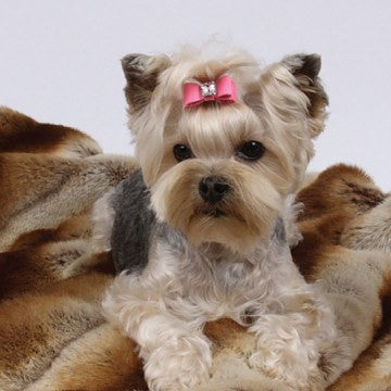 Big Bow Swarovski Dog Hair Bow by Susan Lanci Puppy's Home
