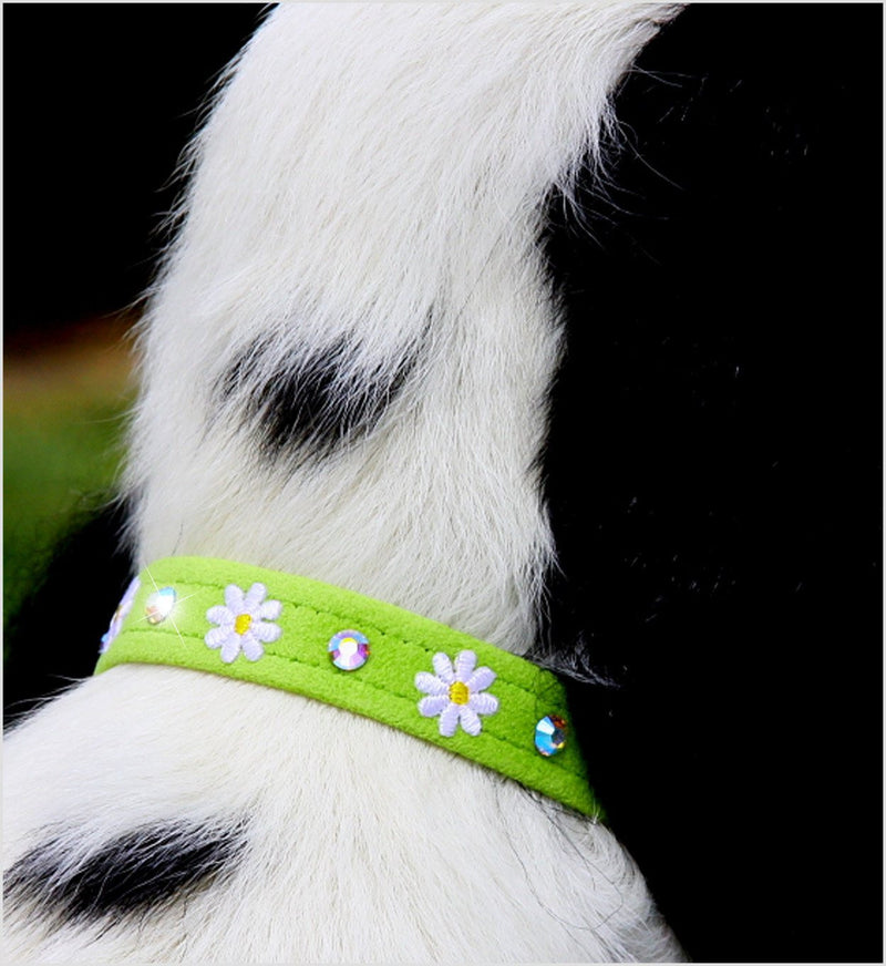 "Daisy Embellished Dog Collar 1/2"" wide by Susan Lanci Puppy's Home"