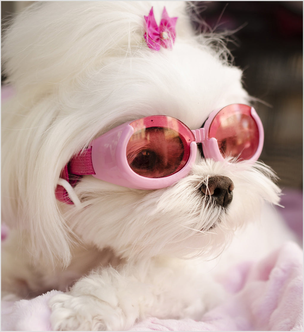 Pink ILS Doggles- Dog Goggles