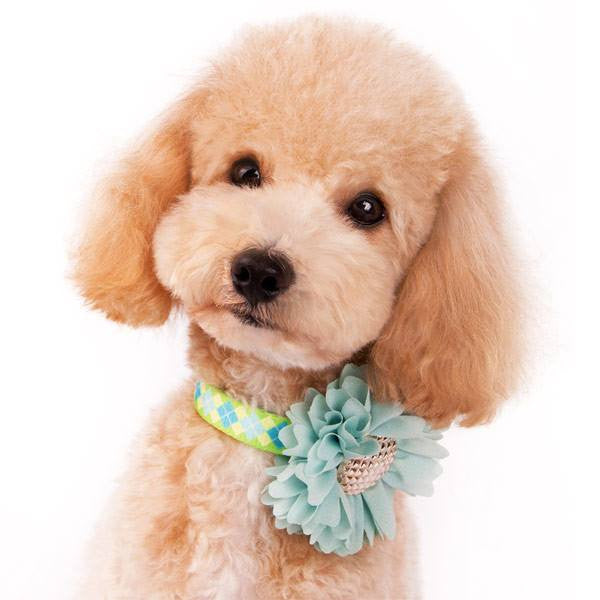 EasyBow Flower Dog Collar Slider Puppy's Home