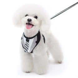 Necktie Dog Harness with Leash Puppy's Home