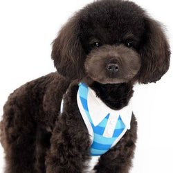 EasyGO Blue Polo Shirt Harness with Leash Puppy's Home