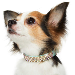 Golden Metalisse Swarovski Crystal Dog Collar by Susan Lanci Puppy's Home