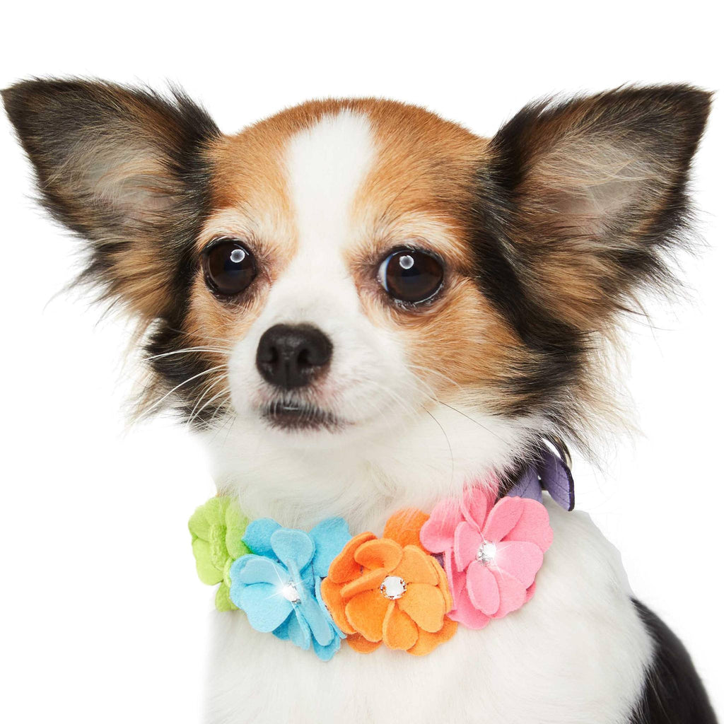 Rainbow Tinkie's Garden Flower Dog Collar by Susan Lanci Puppy's Home