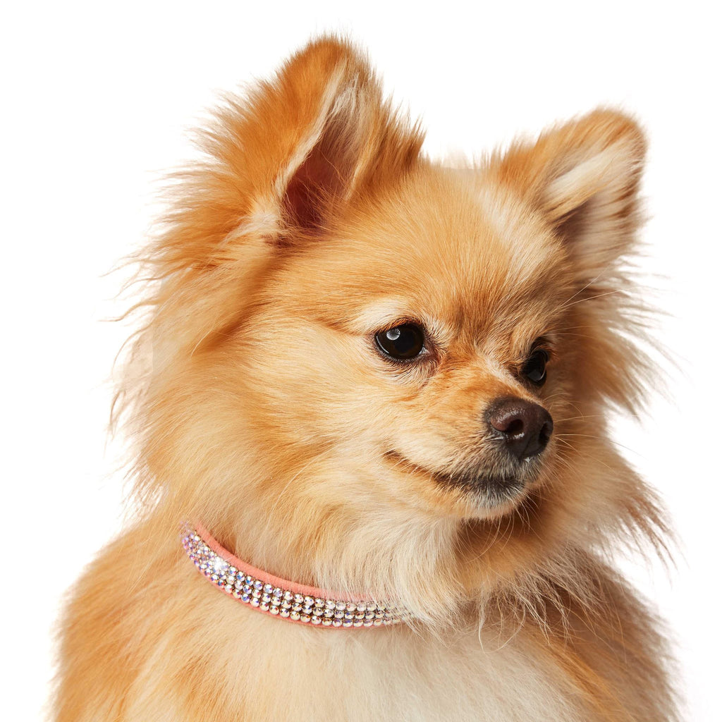 Aurora Borealis 3-Row Giltmore Swarovski Crystal Dog Collar by Susan Lanci Puppy's Home