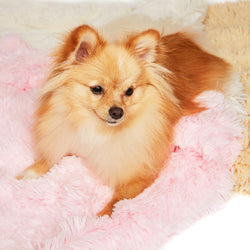 "Fluffy Soft Shag Blanket by Susan Lanci - 28"" x 28"" Puppy's Home"