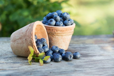 O2 Living recipe - blueberries - by makers of organic, cold-pressed fruit and vegetable Living Juices