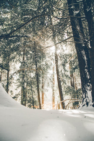 winter forest- O2 Living blog makers of organic cold-pressed fruit and vegetable Living Juice