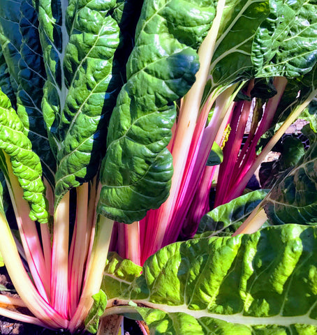 Organic Swiss Chard - recipe by O2 Living makers of organic cold-pressed Living Juice