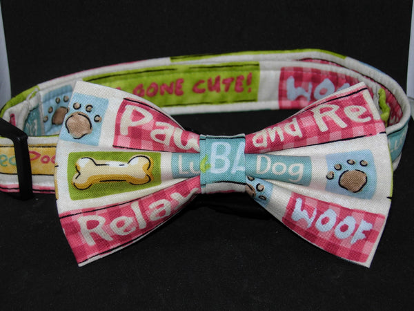 Pampered Pooch Dog Collar / Fun Phrases / Dog Gone Cute / Matching Dog Bow tie - Bow Tie Expressions