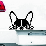 French Bulldog Car Stickers