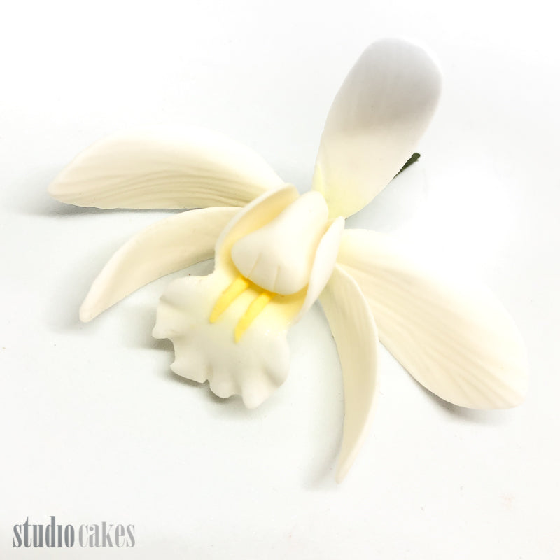 Sugar Flowers - Cymbidium