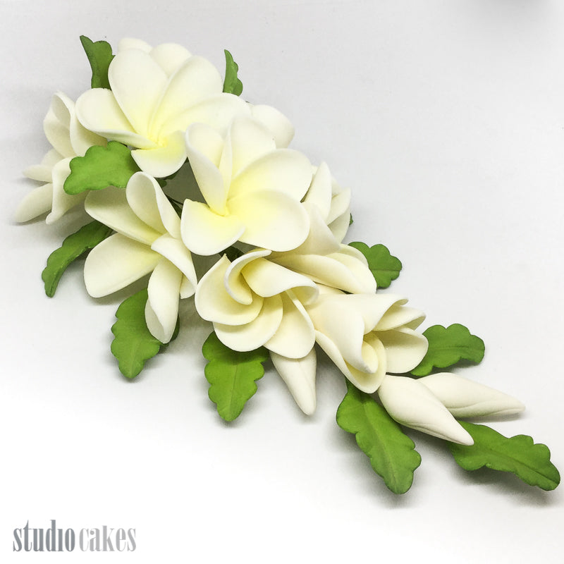 Sugar Flowers - Frangipani Spray
