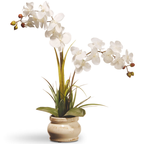 "National Tree RAS-N071060-1 24"" Cream Colored Orchid in Ceramic Pot"