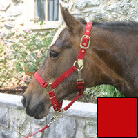 Nylon Halter with Adjustable Chin Strap - Pony - Red (3DAS PORD)