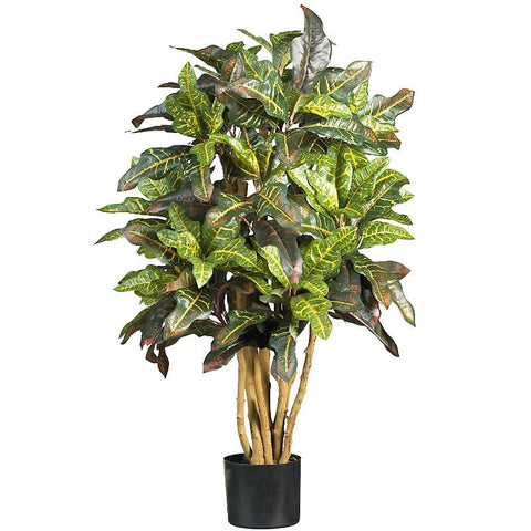 3' Croton Silk Tree - Peazz.com