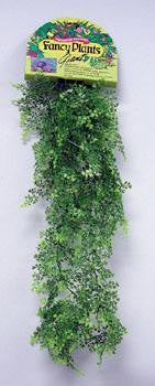 Giant Fancy Plant - Floating Adiantum - Peazz.com