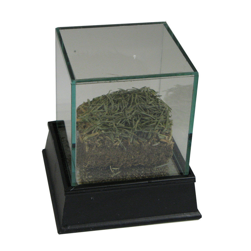 """3"""" X 3""""  Inch Piece of 2004-2009 Citizens Bank Park Sod: Outfield - Philadelphia Phillies (MLB Authenticated) SPI-GU09PHISODOC"""