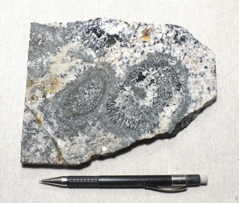 orbicular granite - hand/display specimen of a very unusual plutonic rock from Western Australia