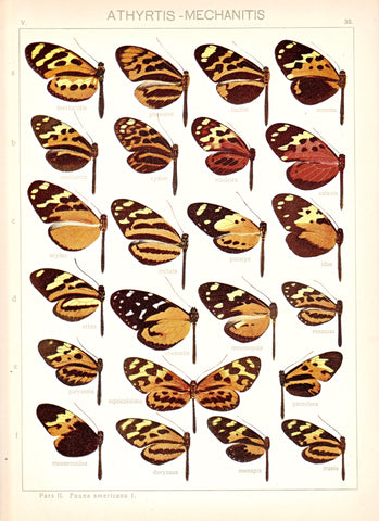 Antique chromolithograph butterfly plate from Macrolepidoptera of the World, Volume 5, Dr. Adelbert Seitz, Editor. Athyrtis - Mechanitis