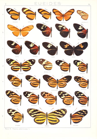 Antique chromolithograph butterfly plate from Macrolepidoptera of the World, Volume 5, Dr. Adelbert Seitz, Editor. Eueides