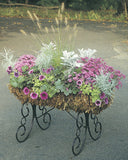 Classic Ironwork Cradle Planters - World of Greenhouses - 2
