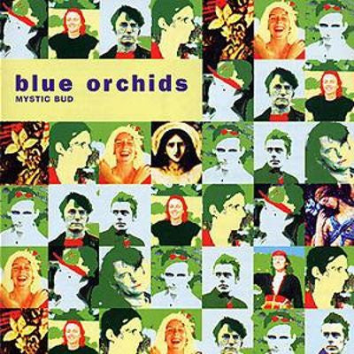 Blue Orchids - Mystic Bud