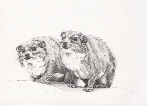 Dassies by Sarah Wocknitz