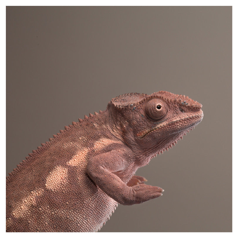 Neutral Chameleon
