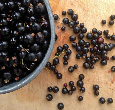 Blackcurrants picked fresh from the garden