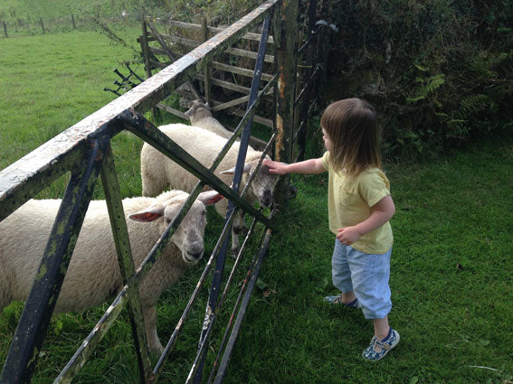 Pheasant Plucker & Son's blog about growing up on a farm - photo of a little girl stroking a lamb