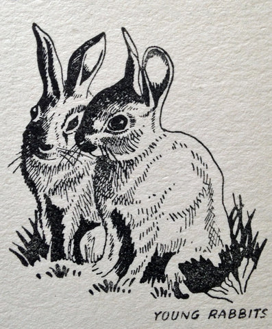 Rabbits, illustration from Wandering with the Woodman by Hugh Brandon-Cox