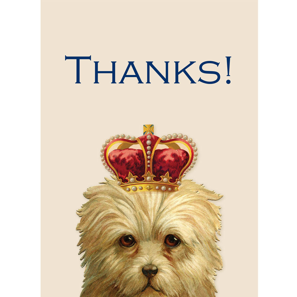 Allie the Terrier thank you card