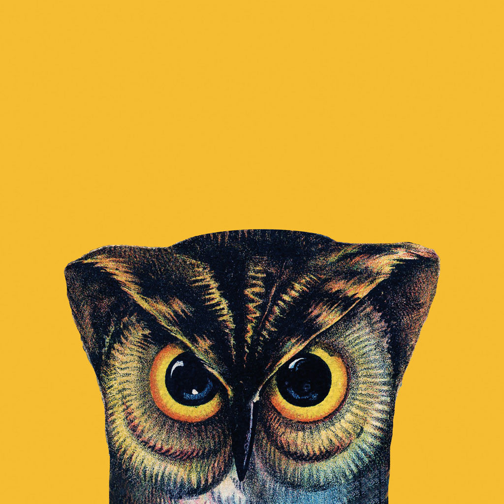 Wise old owl image on a bold yellow background