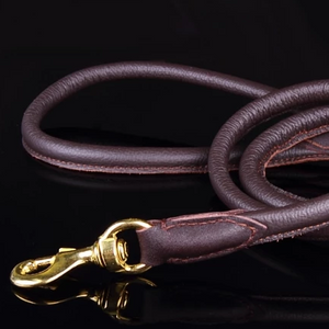 Padded Rolled Dog Leash Coffee Brown