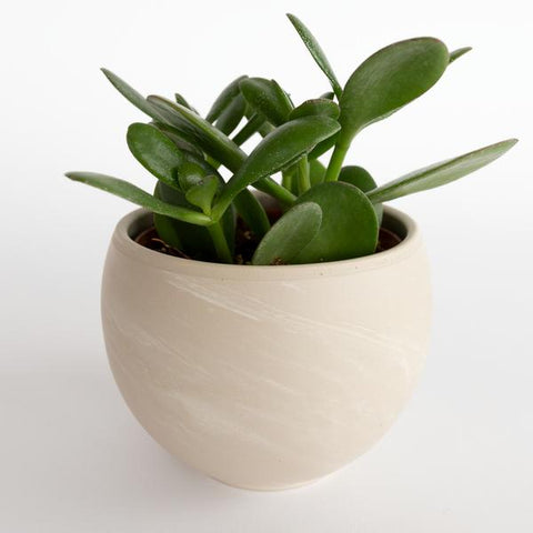 Simone small ceramic plant pot with swirl design