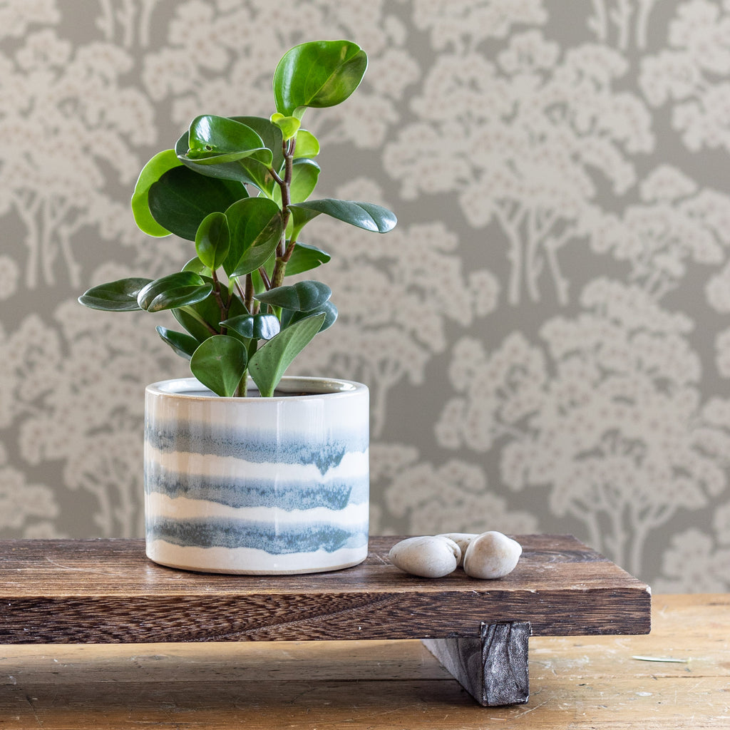 Aria, a glazed ceramic planter with a watery blue stripe shown with a plant and on Edo Wood Board