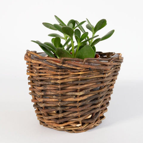 Beckwith Plant Basket from Tonic Living