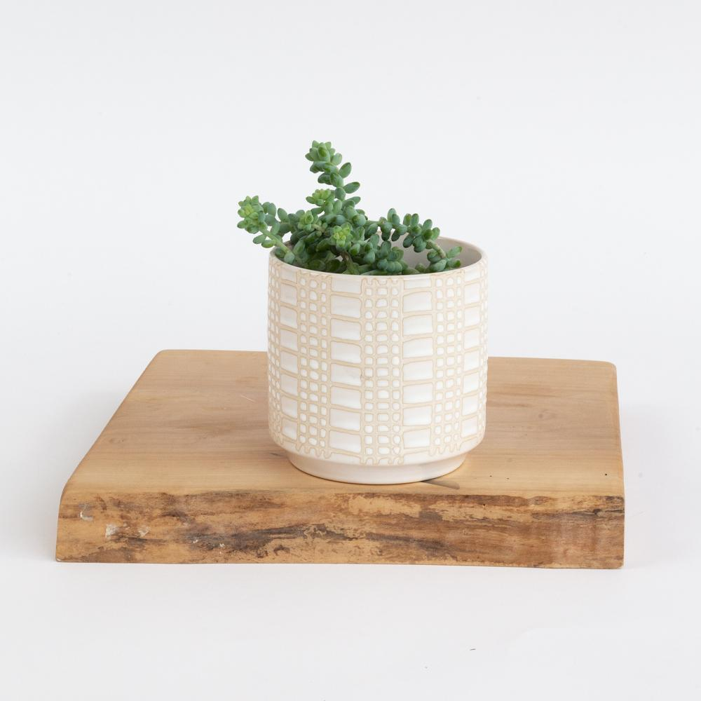 Dotti cream ceramic plant pot from Tonic Living