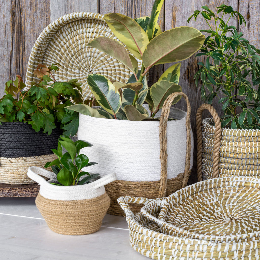 Straw and grass baskets and trays with plants