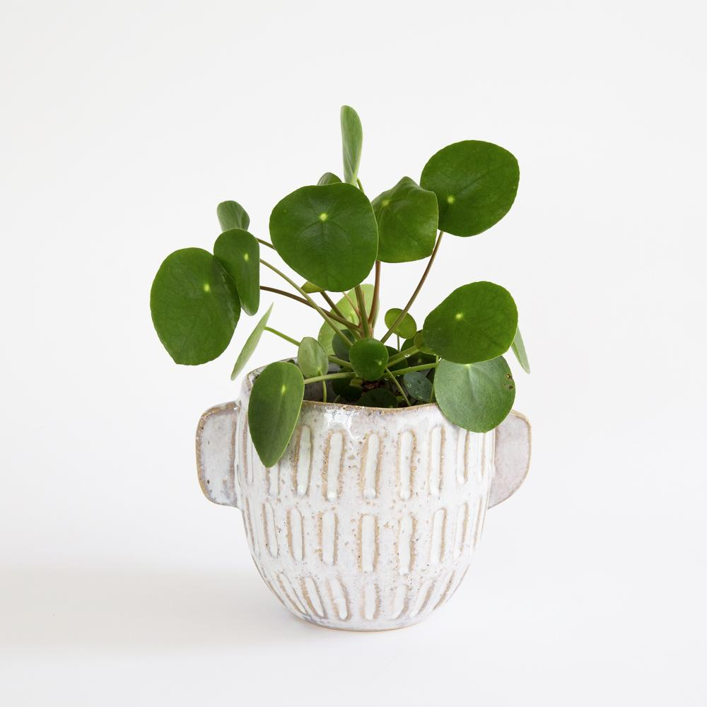Terrie off white glazed ceramic plant pot from Tonic Living