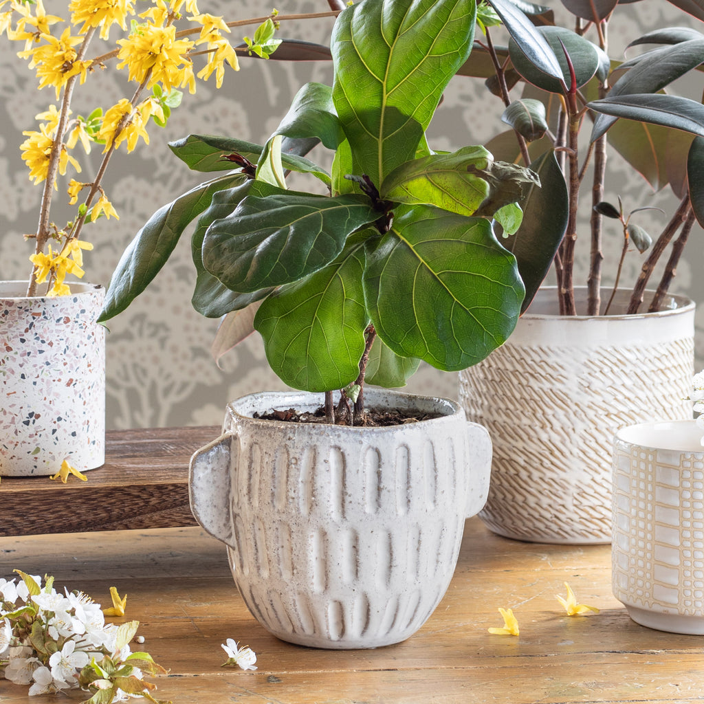 Terrie creamy glazed ceramic plant pot  shown with Tessa Terazo, Wilma and Dotti Cream plant pots