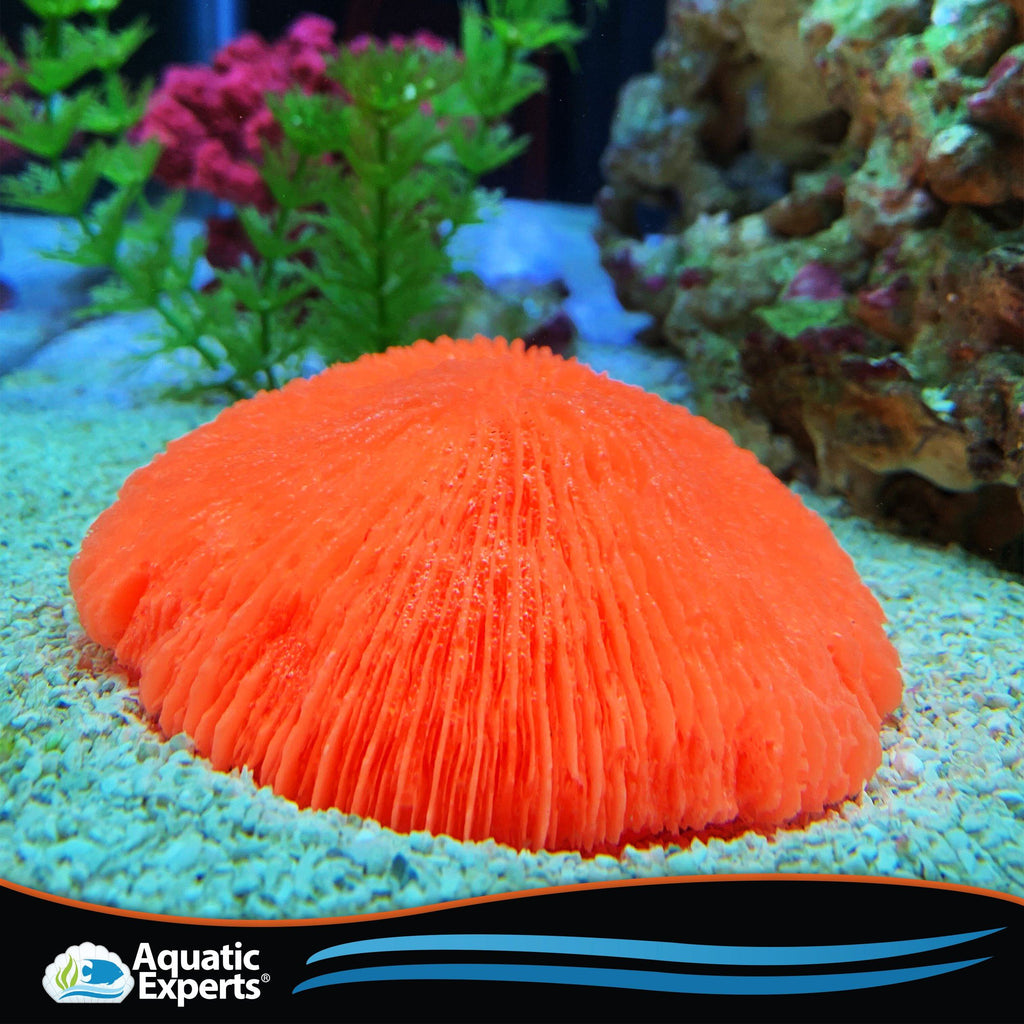 Artificial Aquarium Coral - Freshwater and Saltwater Aquarium Decorations, Assorted Medium Coral - Disc Coral Neon Orange Coral Decorations Aquatic Experts