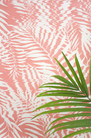 Hazy Palm in Coral
