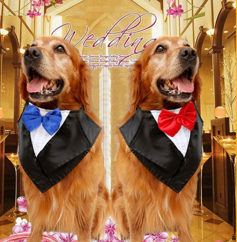The Wedding Dog