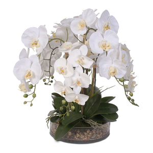Life Like White Real Touch Phalaenopsis Orchid & Vanilla Grass Bush in a Glass Bowl #F-14C