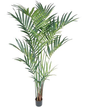 Kentia Palm Tree #2296-8P