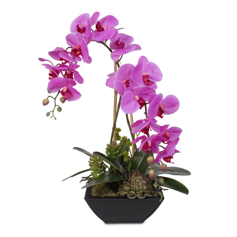 Real Touch Double-Stem Phalaenopsis Silk Orchids with Succulents in Metal Pot #23